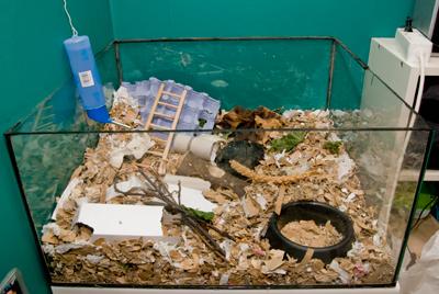Akvarium med en yta på ca 0,36 kvm