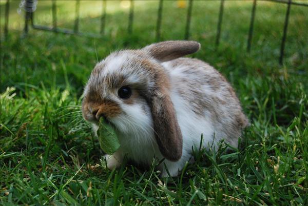 Kaniner.jpg