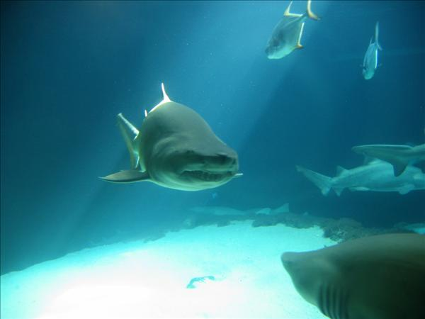shark_IMG_6773_.jpg