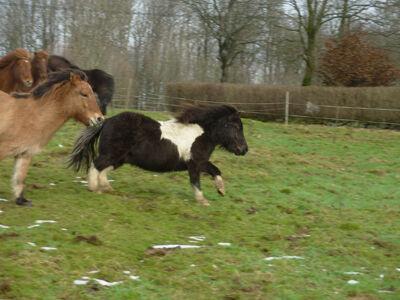 Spralliga hästar och ful tappi