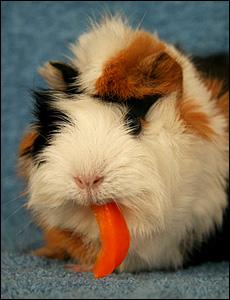 Paprika är bland det mest c-vitaminrika som finns.
