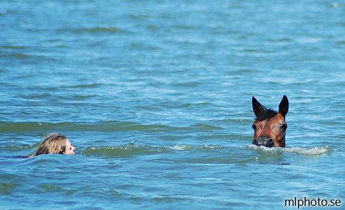 Min vattenrädda häst
