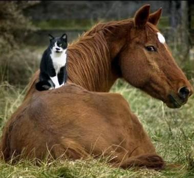 katt och häst.jpg
