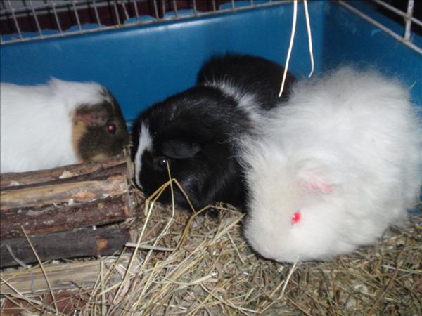 Greta, Ninni och Wilma.