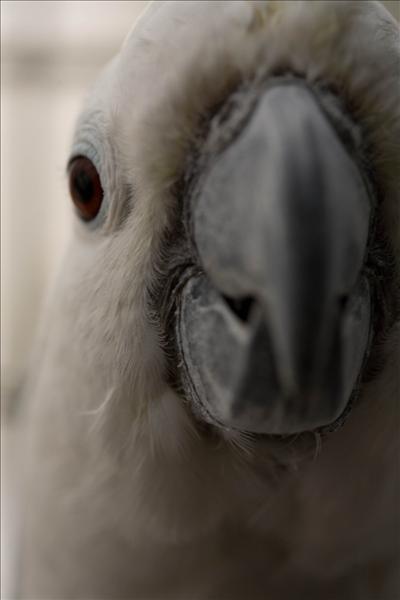 djur080611-23.jpg