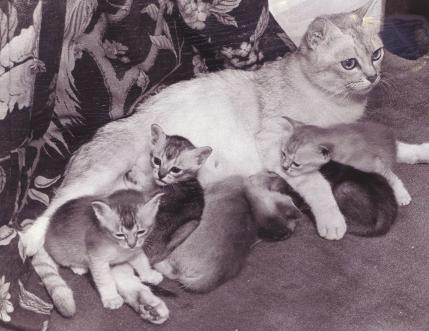Astahazy Galatea and kittens
