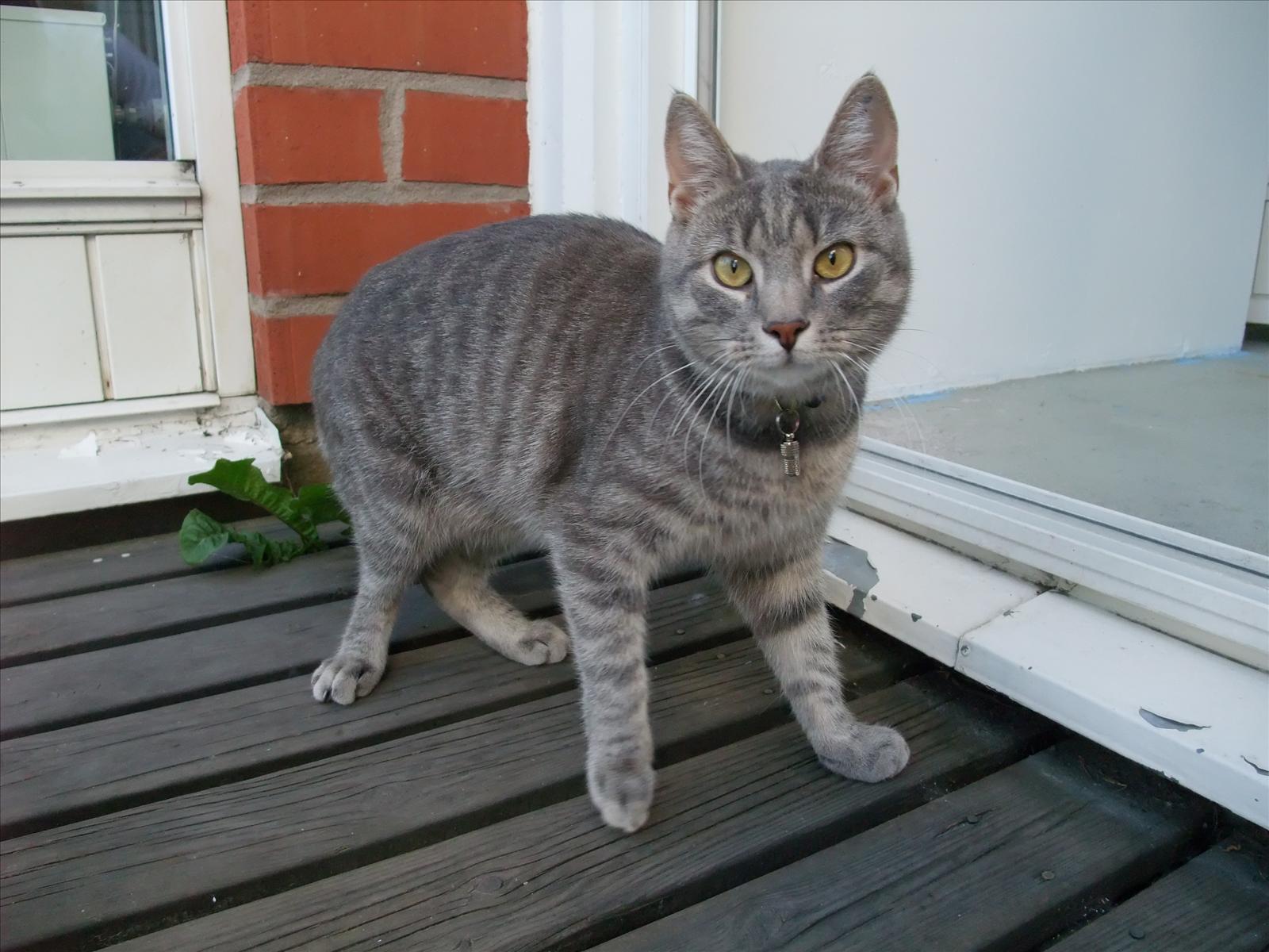 Bortsprungna katter