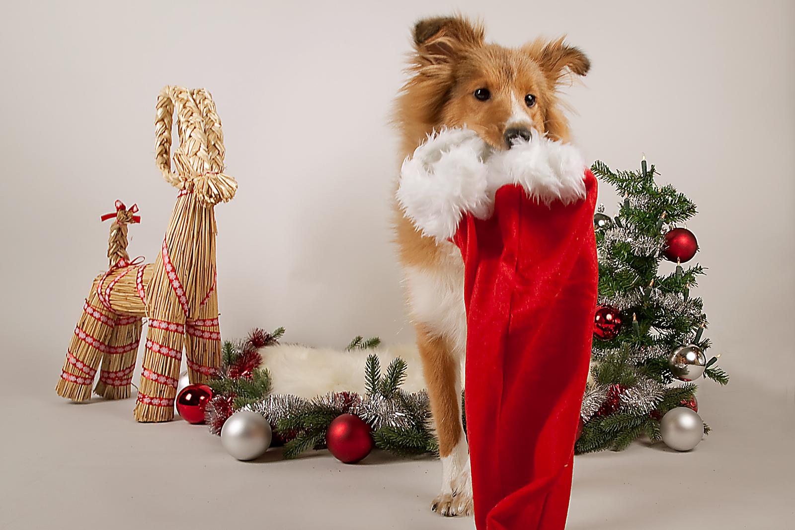 Jultävling - Julkort