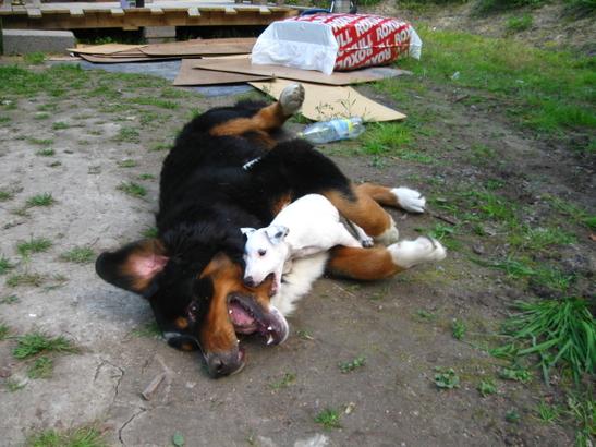 Jack russell terriern Hugo med kompis. Foto: Empisen.