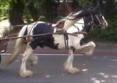 horse1782-2.jpg