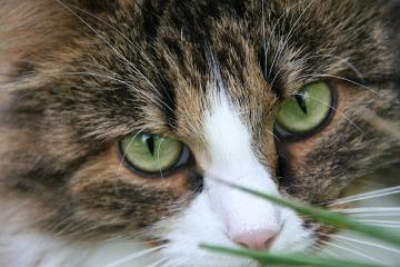 Katt-oogon.jpg