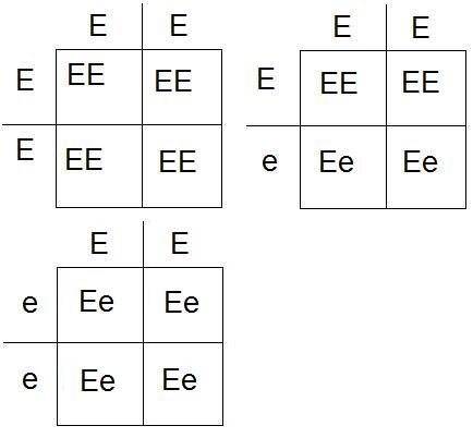 Korsningsschema EE EE EE Ee.jpg