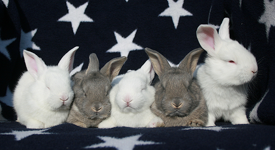 vit rö och viltblå ungar.jpg