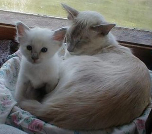 mirabelle-kattunger_002.jpg