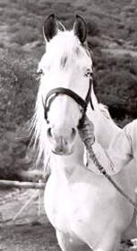 Hästen Topper