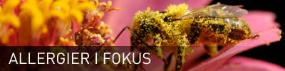 Allergier iFokus