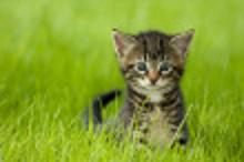 Kattpolisen.ifokus!