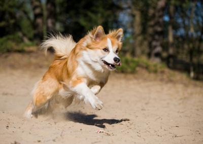 Hundar ska inte motioneras när det är varmt ute.