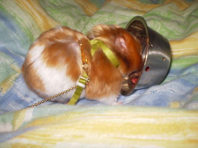 Hamster koppel