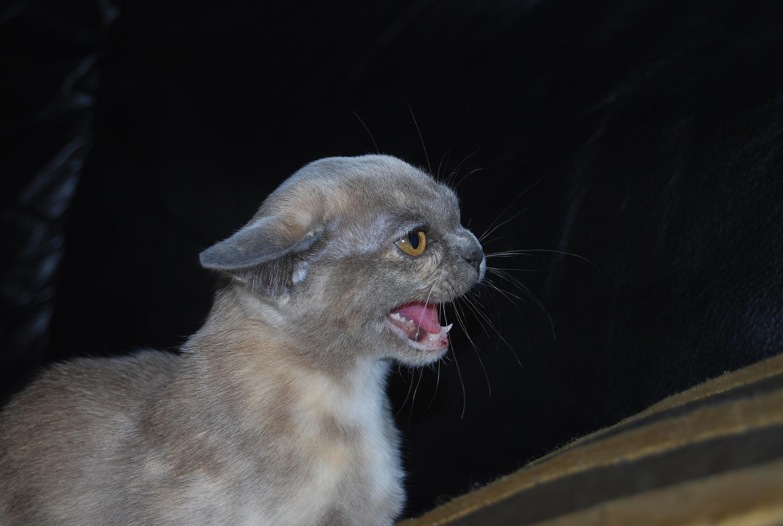 Månadens katt