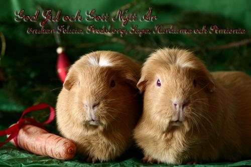 God Jul önskar FeliciaS & marsvinen