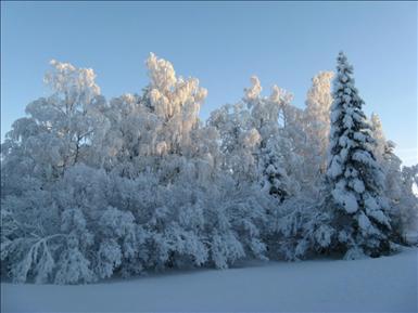 dolla_vinterbild.jpg
