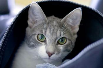 Katt i myskorg