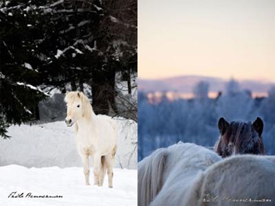 Bild 1 och 4 i ett till Fokus på: selfrejection