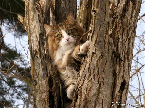 Katten heter PR S*Svampan's Tryffel och har en här