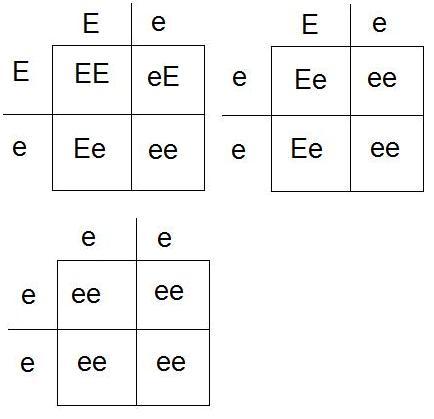Korsningsschema Ee Ee Ee ee ee ee.jpg