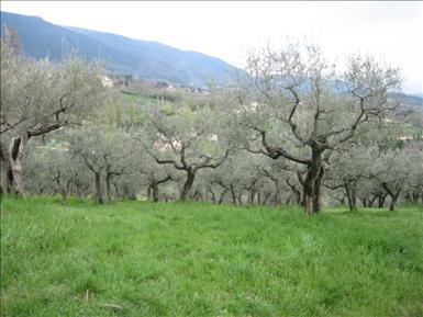 Assisi 2006 114.jpg