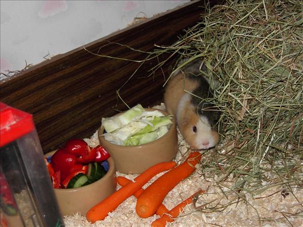 Freya vid grönsakerna.jpg