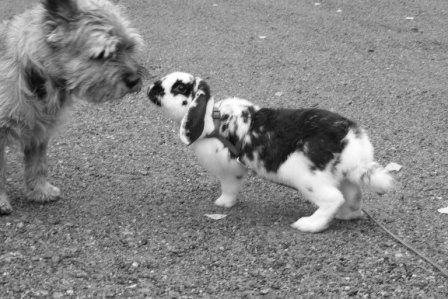 Hunden Bambi & Tippo