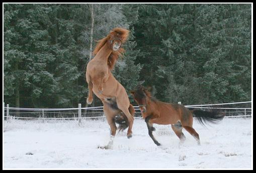 Russbilden Januari2010