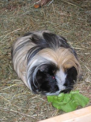 guinea-chipsy-1946635-l.jpg