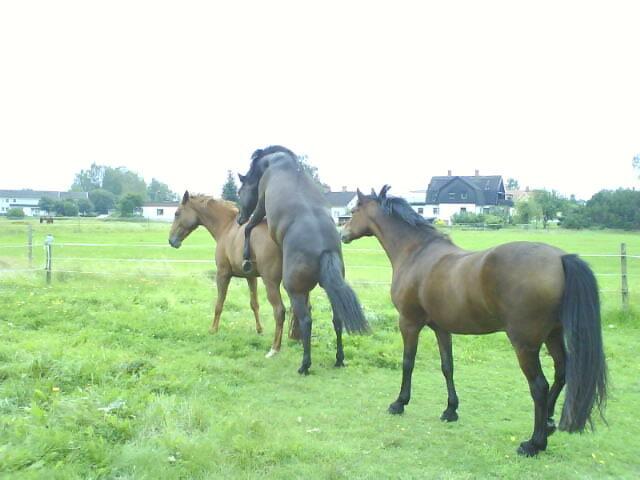 biverkningar munkpeppar häst