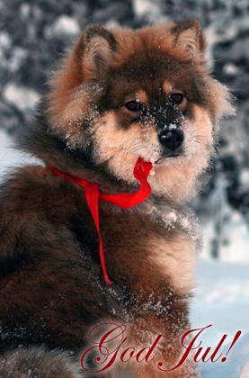 1a, KickanW, julhunden Novaya.jpg