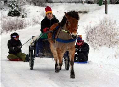 Vinnare ponnytravbild feb-09