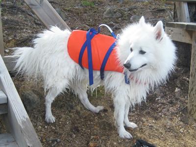 Flytväst är bra när hunden simmar på djupare vatten.
