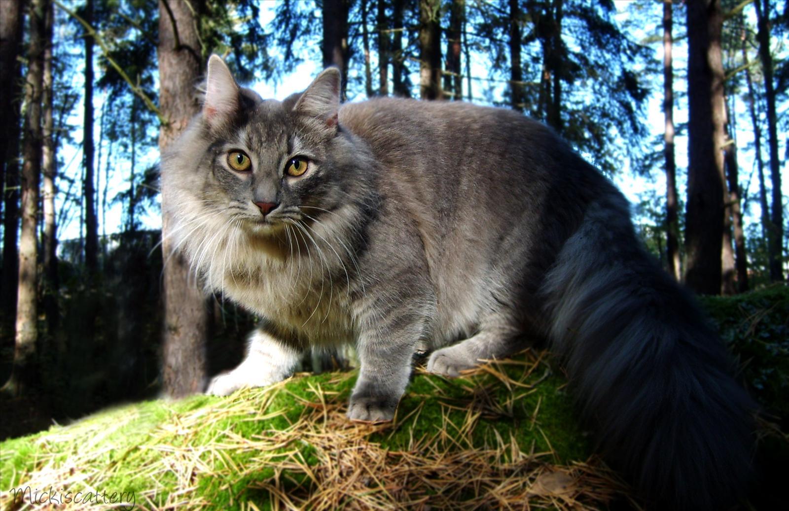 Månadens Katt - April