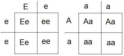 Korsningsschema E A.jpg