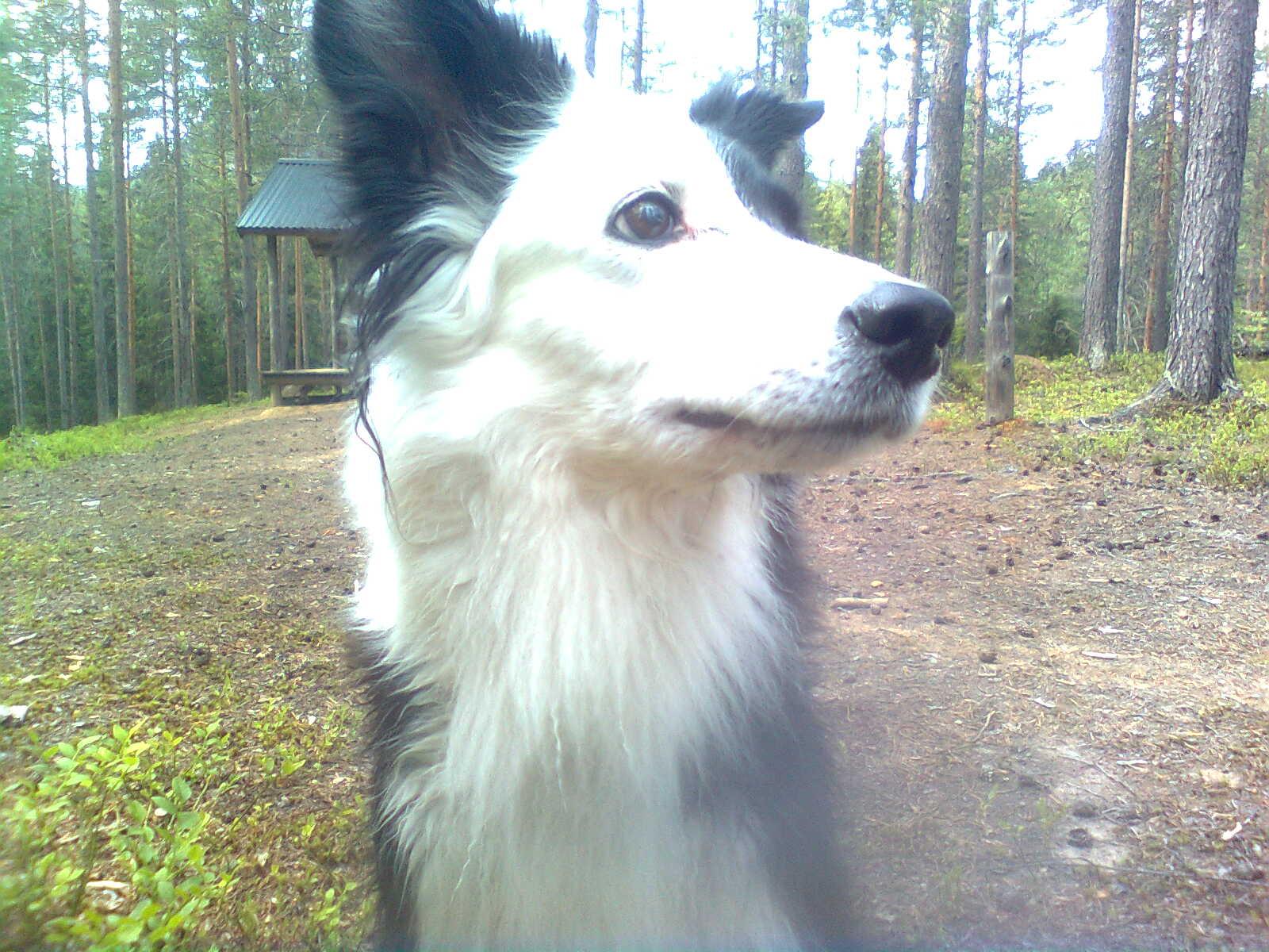 Månadens Hund - November