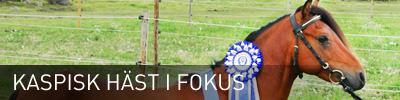 Kaspisk häst iFokus