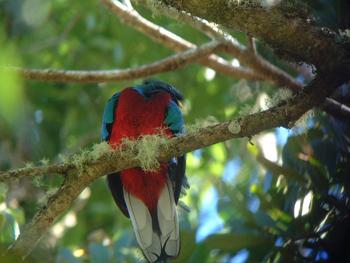 quetzal02.JPG