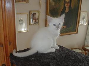 mirabelle-kattunger_010.jpg