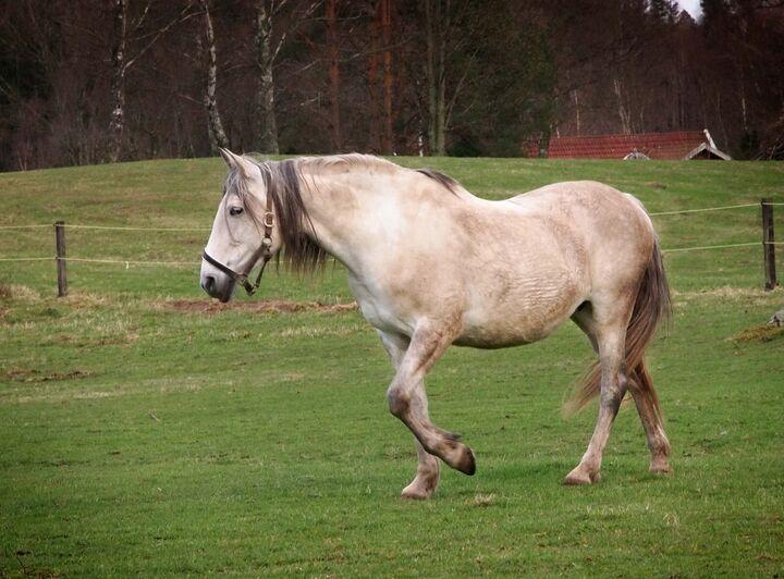 Två På En Häst?