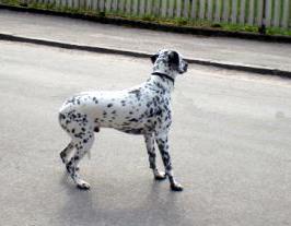 räddhund.jpg