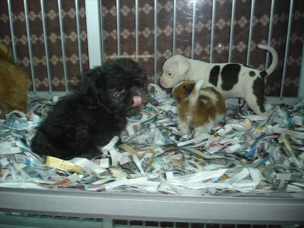 Hundar säljes