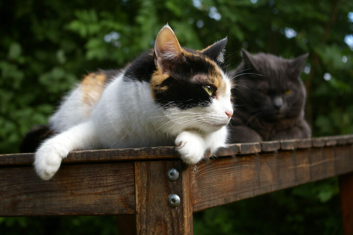nar kastrerer man katter