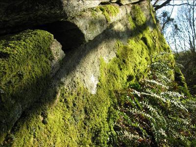 Bidrag 4 Vårskog